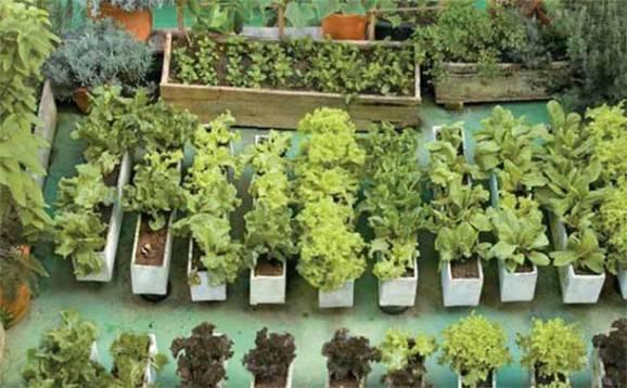 telhado verde horta