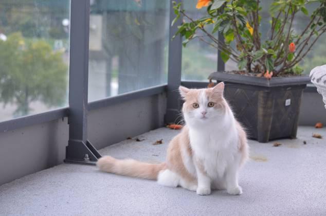 Gato na varanda