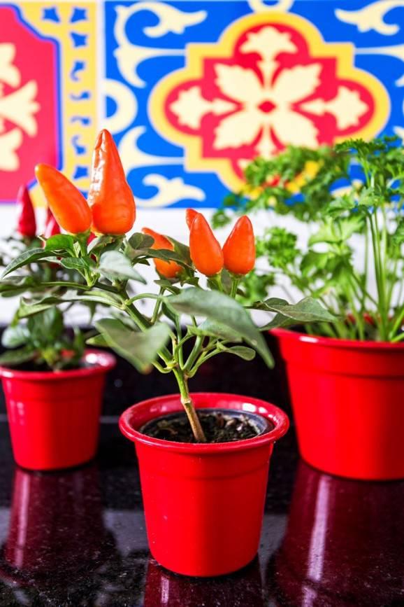luciane mota cozinhas decoradas vaso vermelho pimenta