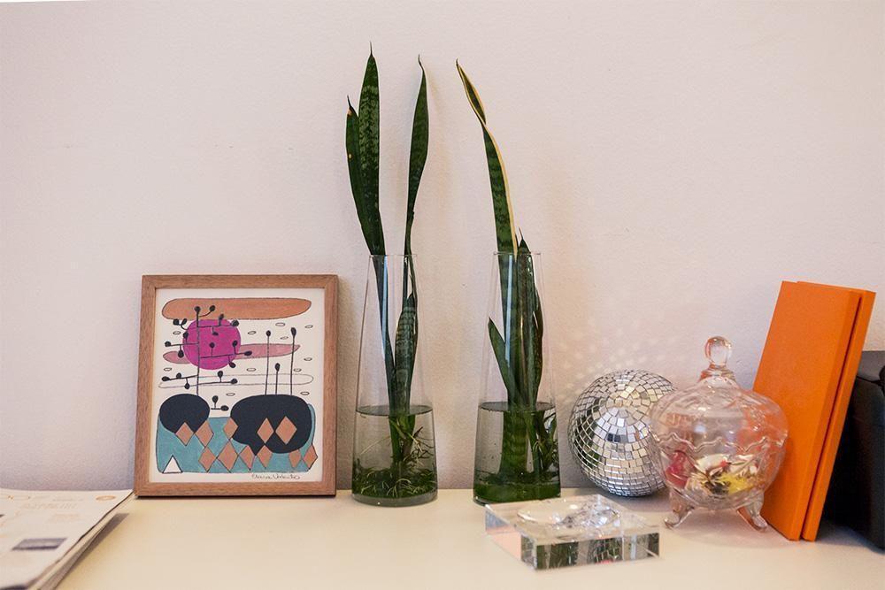 Plantas para apartamento - vasos de vidro com água e plantas