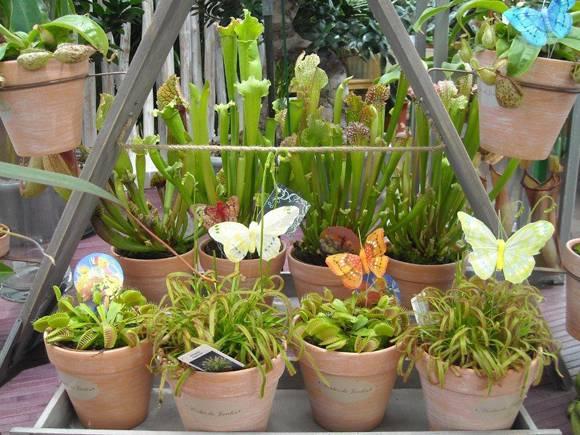 Plantas carnívoras, seu jardim com mais emoção