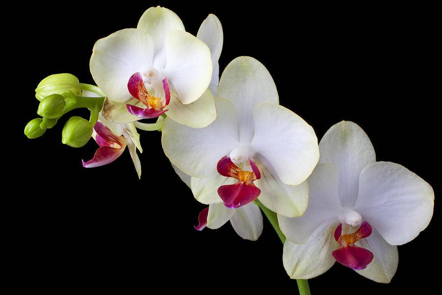 Orquídeas, como manter suas plantas sempre lindas