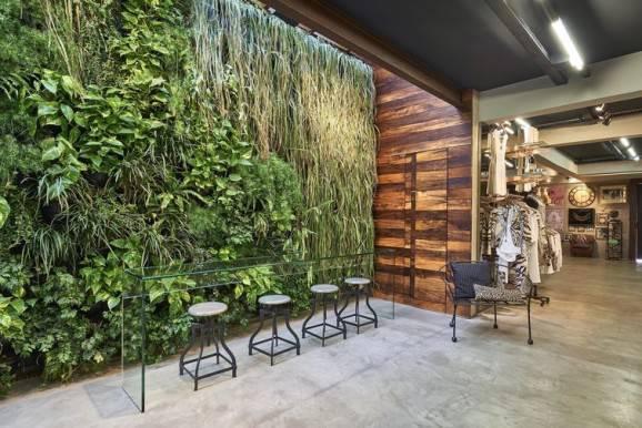 plantas trepadeiras