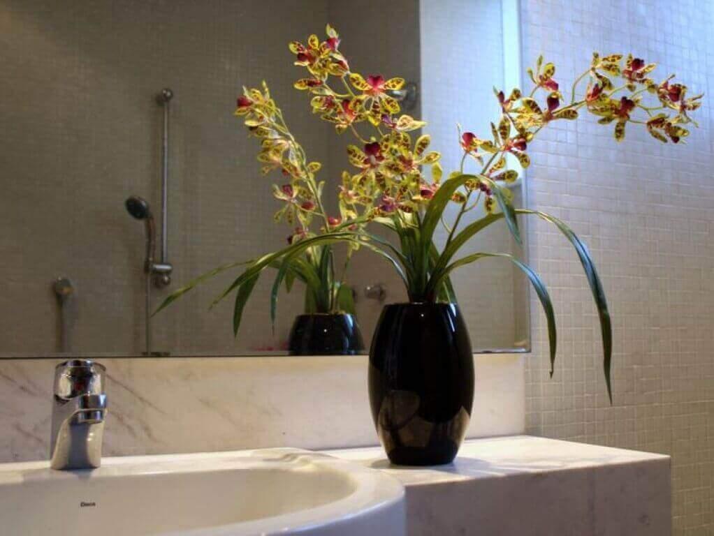 Como cuidar de orquídea banheiro