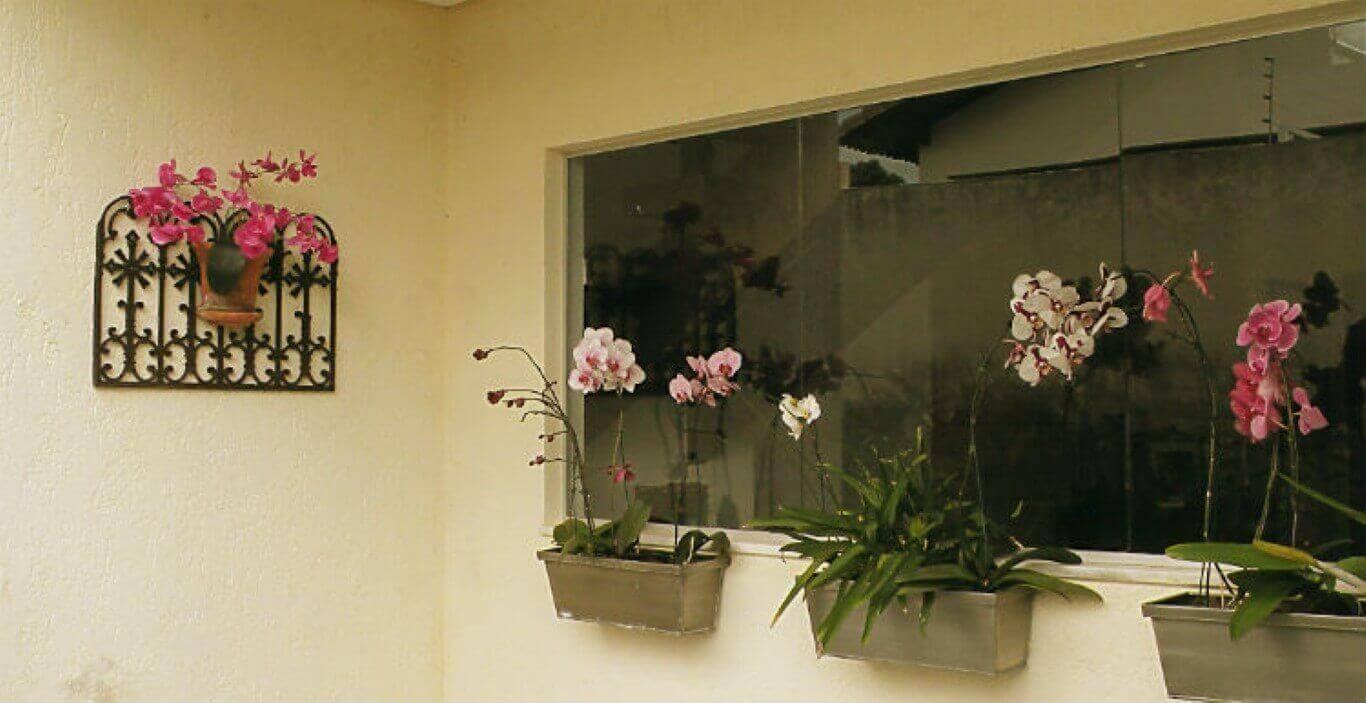 Como cuidar de orquídea em janelas