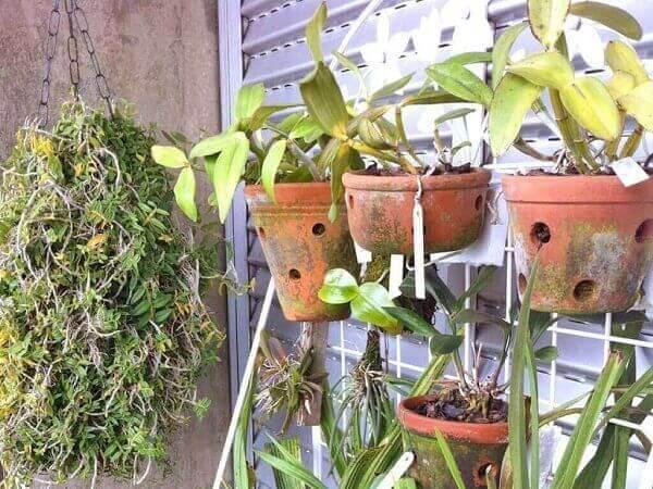 Como cuidar de orquídea em varanda