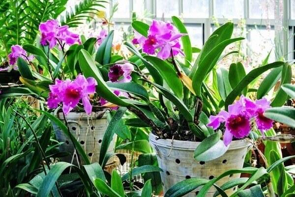 Como cuidar de orquídea em vasos brancos