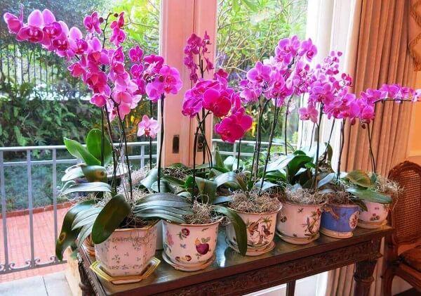 Como cuidar de orquídea na janela
