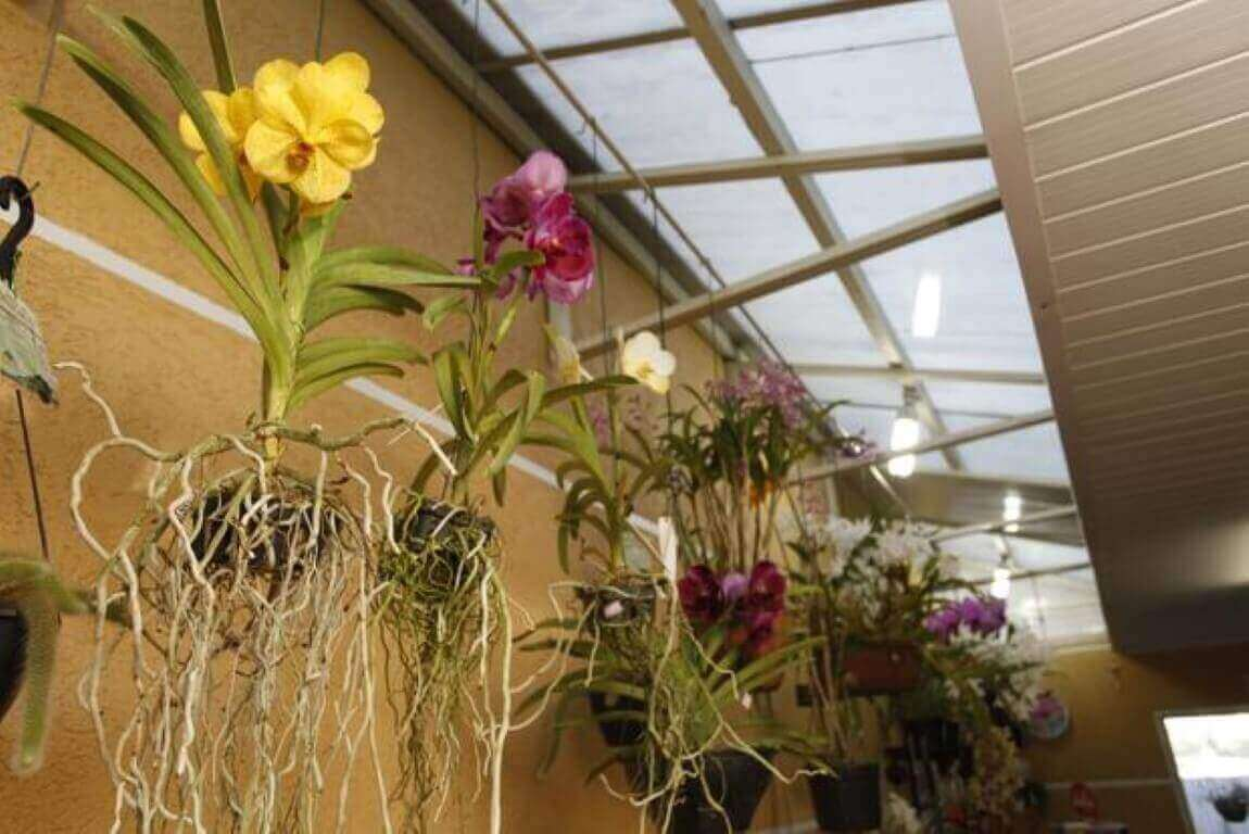 Como cuidar de orquídea no corredor