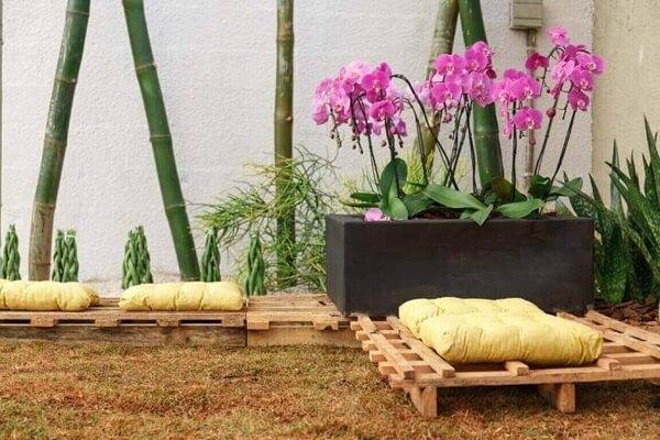 Como cuidar de orquídeas em jardim