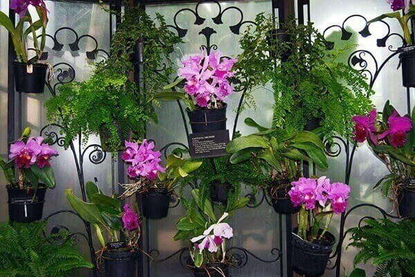 Como cuidar de orquidea em vasos