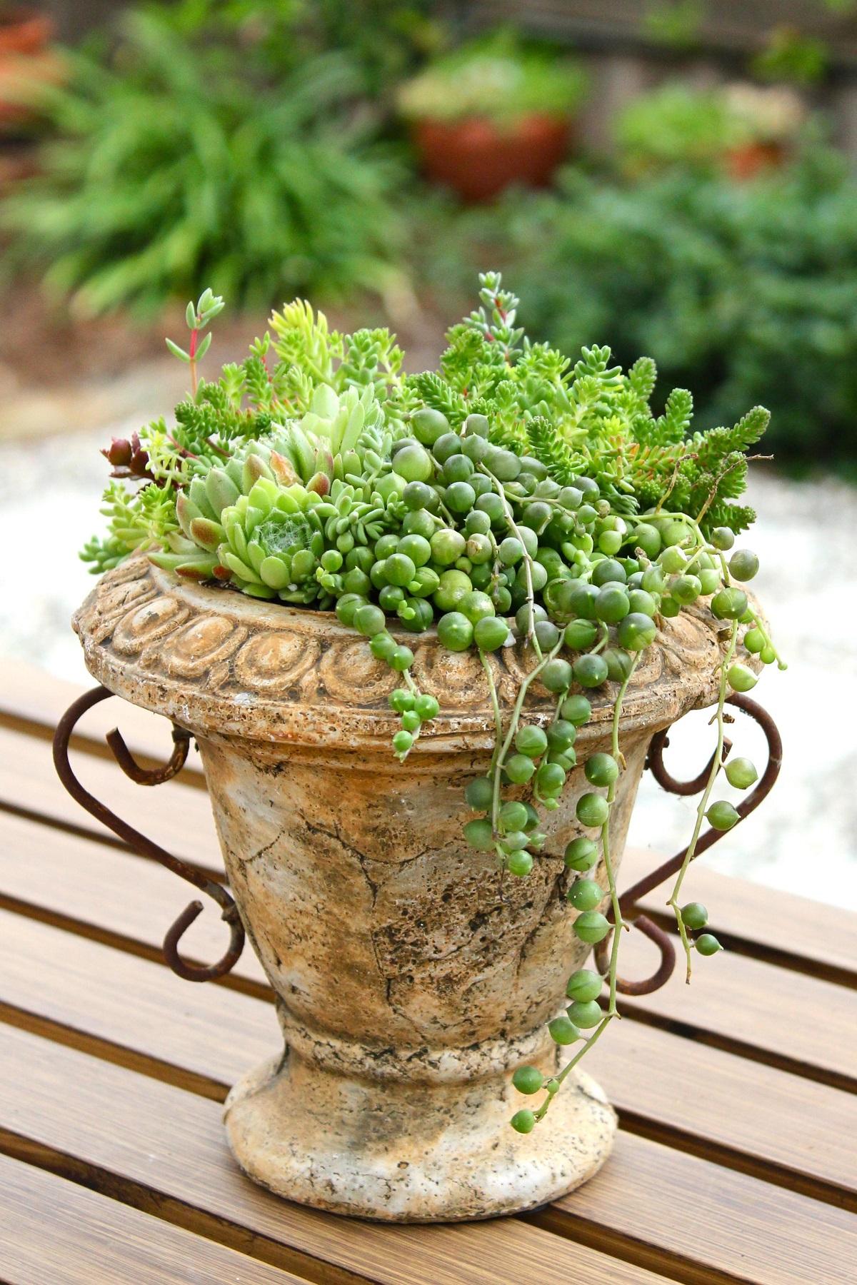 Suculentas uma boa ideia3 decorar jardim