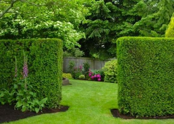 Cerca para jardim como usar as plantas para delimitar a área
