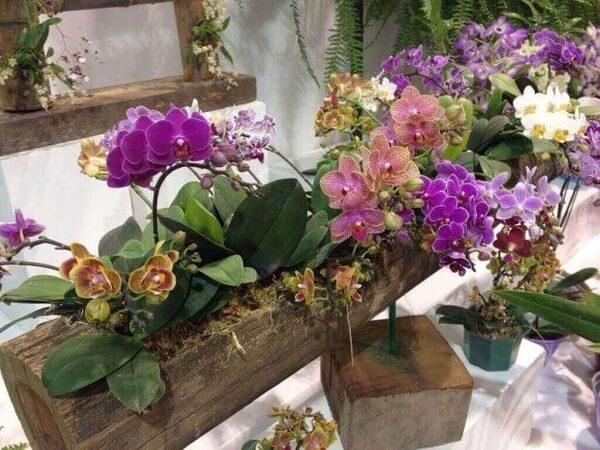 como cuidar de orquídeas arranjo