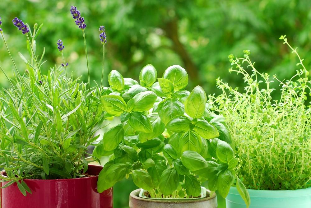 horta em casa ervas2