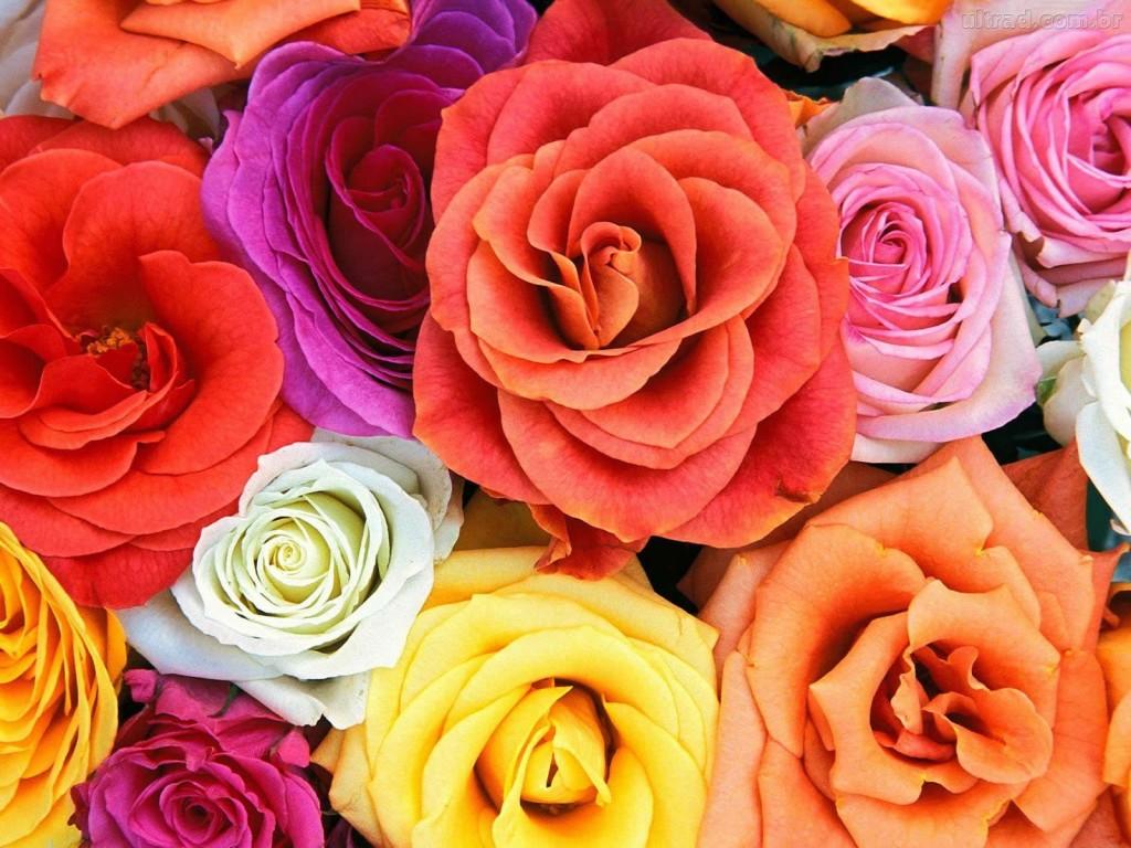 decoração de ano novo - rosas coloridas
