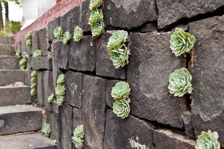 30493- jardim pequeno -eder-mattiolli-viva-decora
