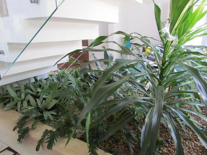 30433- jardim de inverno na sala -eder-mattiolli-viva-decora