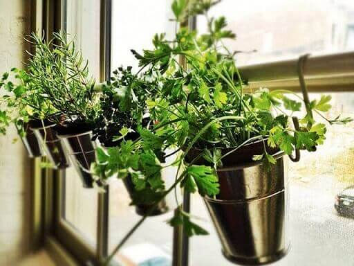 Horta vertical em vasos metálicos na janela Foto de Pinterest