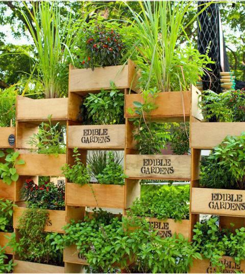 horta vertical com caixotes de madeira