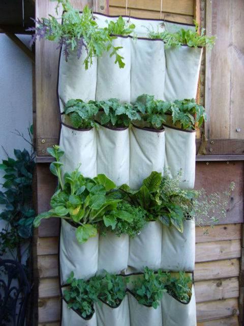 horta vertical criativa com sapateira reutilizada