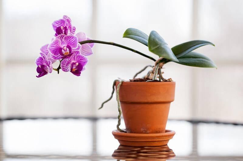 orquideas mesa de centro