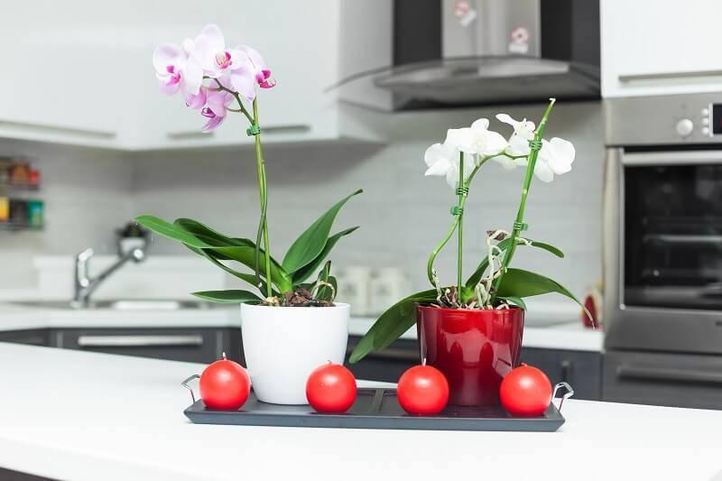 orquideas naa bancada da cozinha