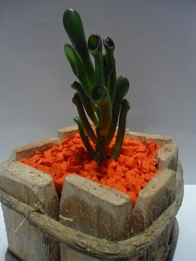 Suculenta em vaso de madeira