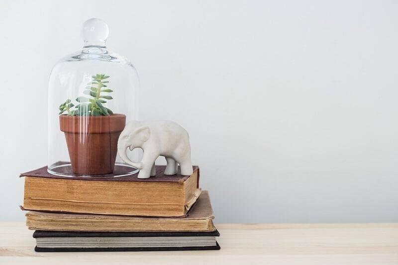 suculenta no livro