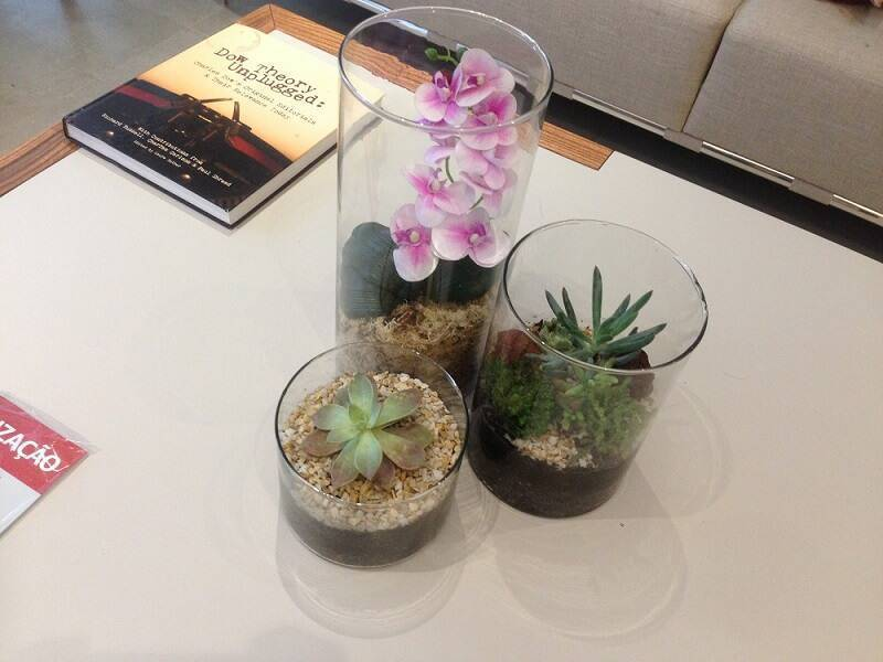 suculentas na mesa de centro