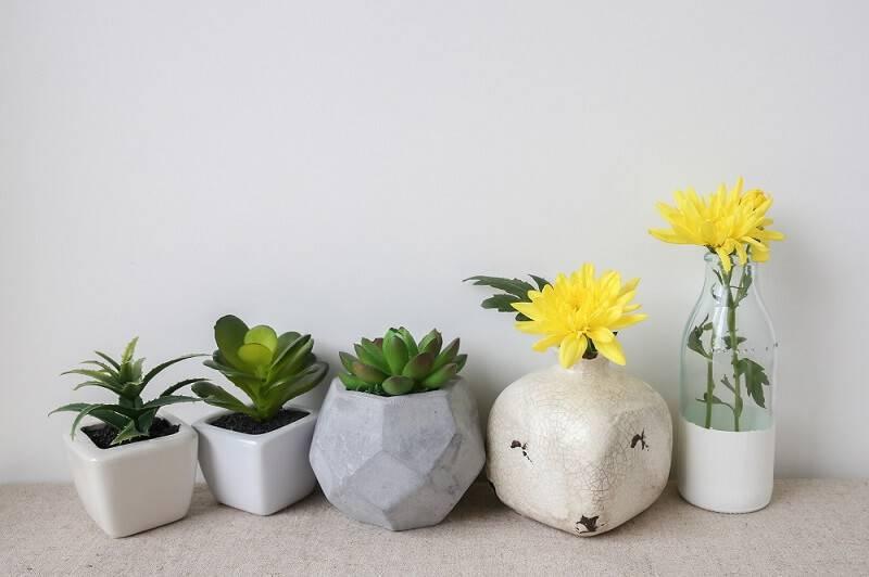 suculentas no vaso de cimento