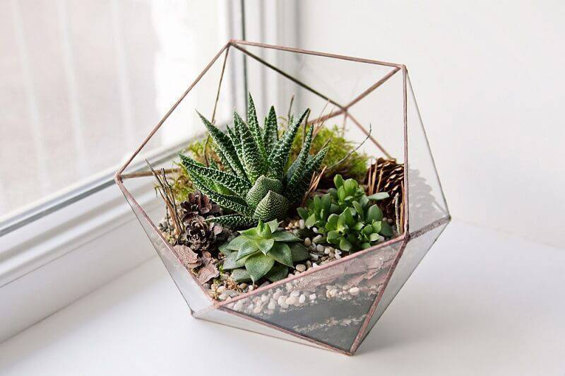 suculentas no vaso de vidro triangular