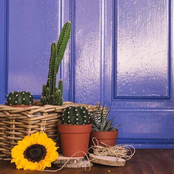 Cactos em decoração de jardinagem