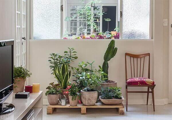 Cactos na decoração de interiores