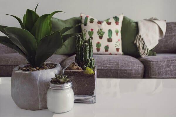 Cactos na decoração de sala de estar grande