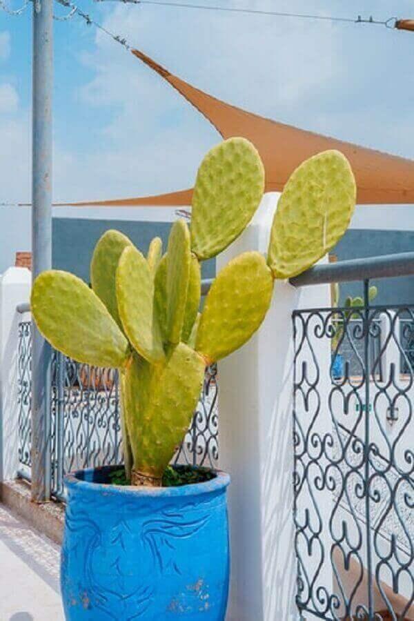 Cactos na decoração de varanda