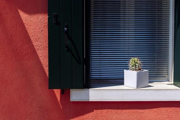 Cactos na decoração janelas