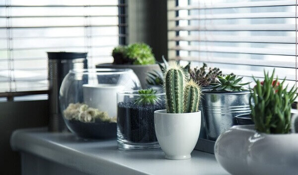 Cactos na janela