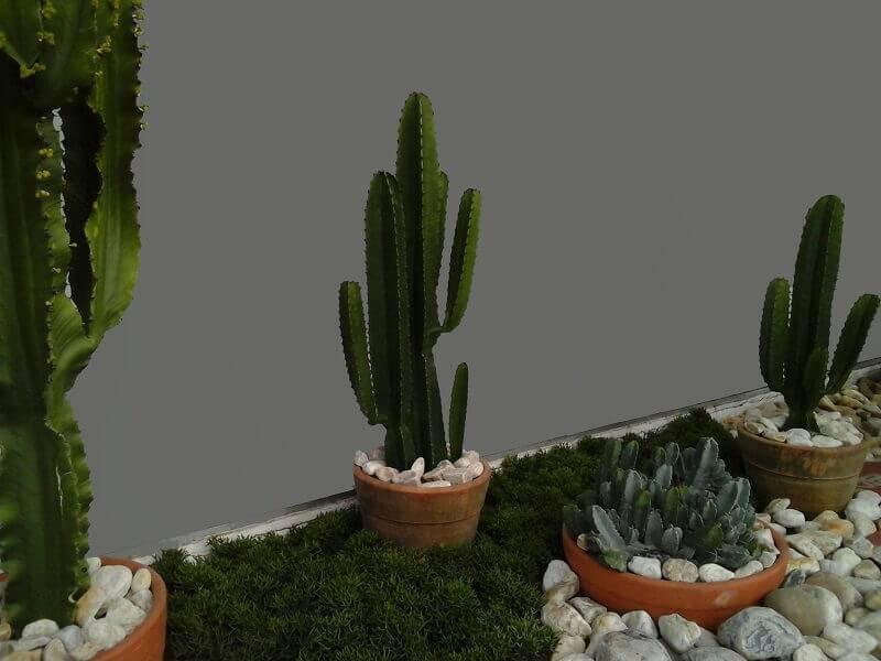 cacto jardim externo alalou