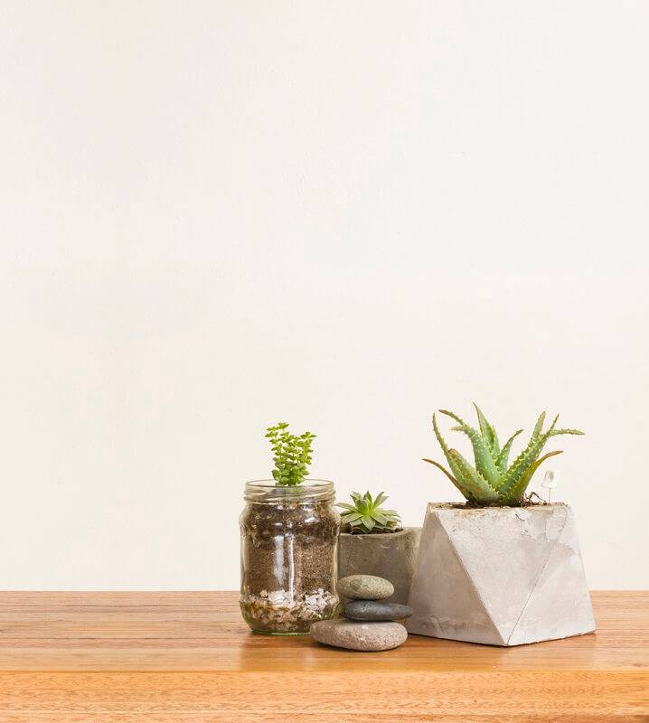 cacto mini vaso de concreto e vidro