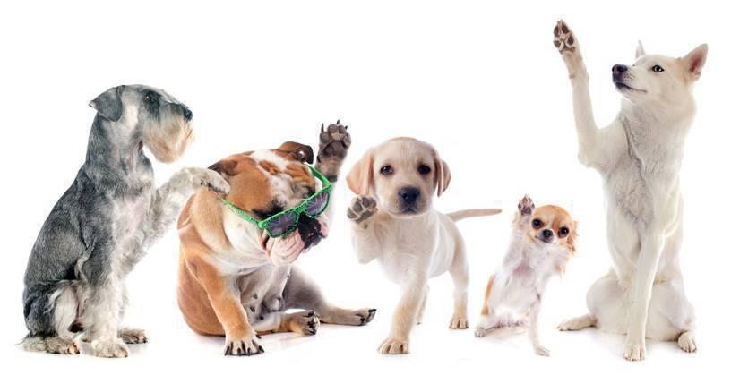 Decoração para pets - cachorros com as patinhas levantadas