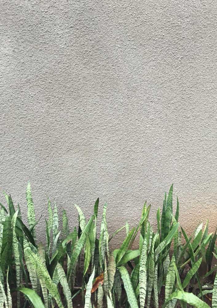 Aprenda como aplicar textura de parede no jardim