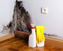 Como tirar mofo da parede com dicas simples