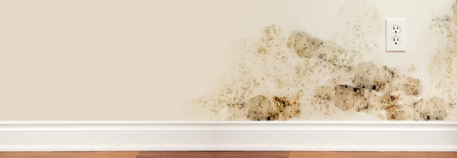 Como Tirar Mofo da Parede nas paredes extensas