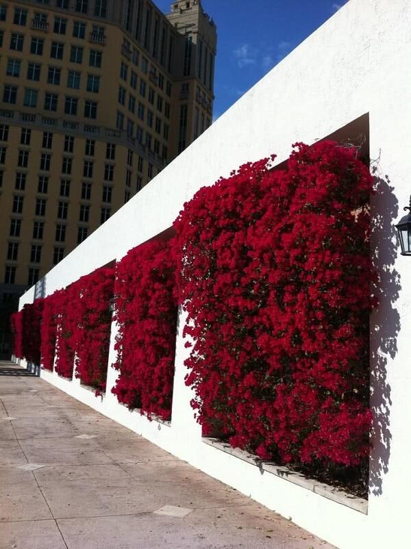 As flores do jardim suspenso se destacam na parede branca