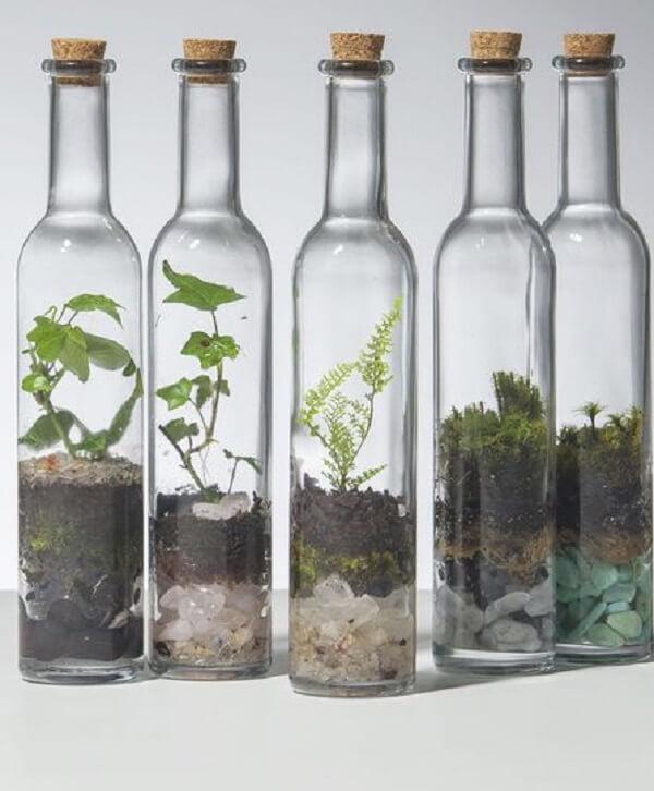 Monte seus terrários em garrafas de vidro