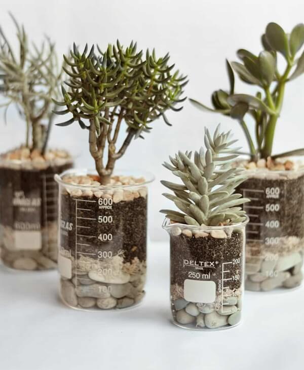 Os potinhos de medida podem servir de recipiente para o terrário