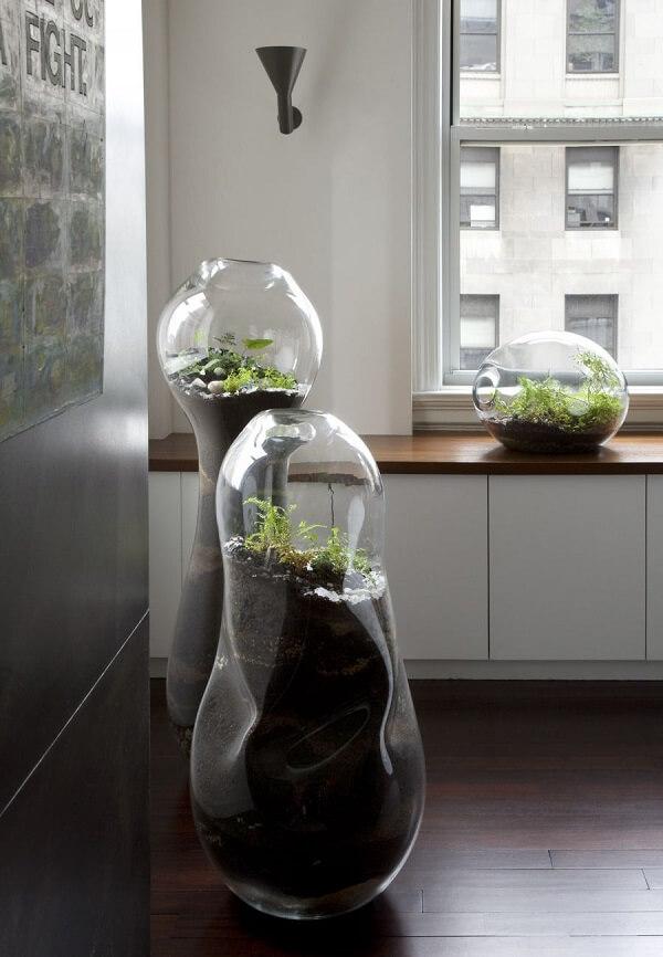 Que tal cultivar um terrário gigante em casa?