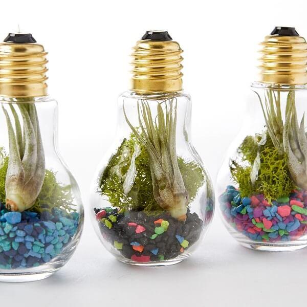 Reaproveite as lâmpadas para formar lindos terrários