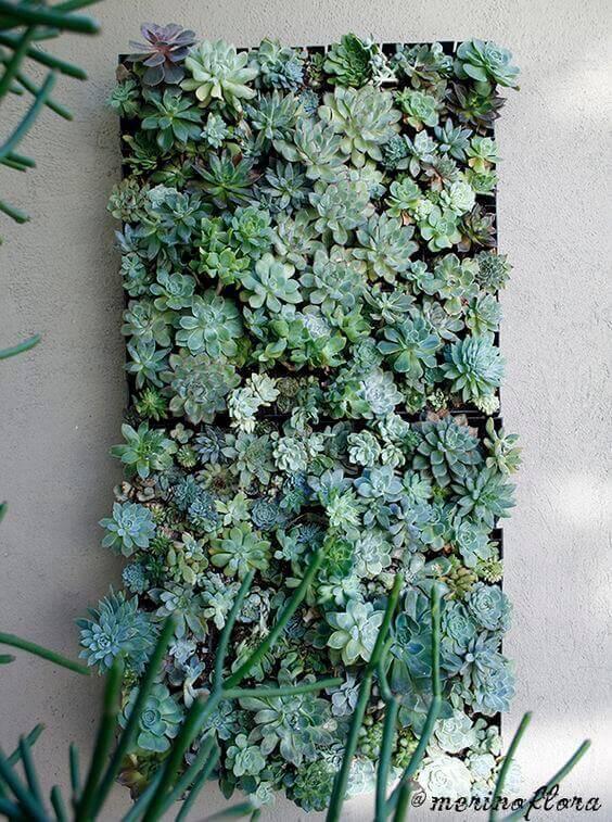jardim suspenso de suculentas em moldura
